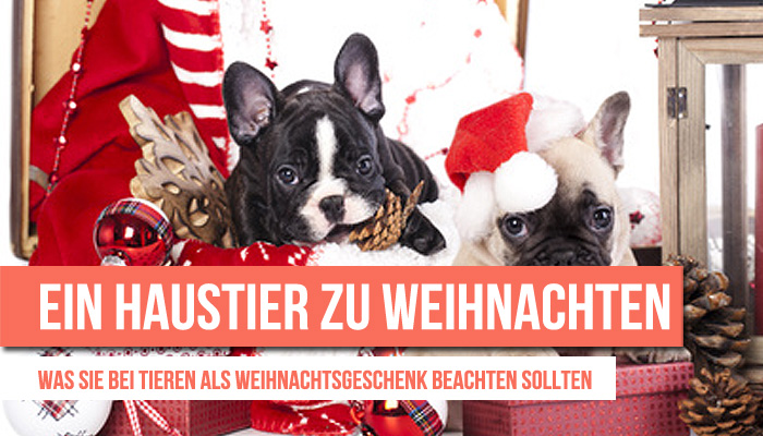 haustier-weihnachten